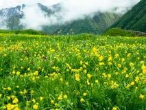 Κίτρινα λουλούδια σε ένα υπόβαθρο των βουνών Στοκ εικόνα με δικαίωμα ελεύθερης χρήσης
