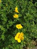 Κίτρινα λουλούδια σε μια σειρά  στοκ εικόνα με δικαίωμα ελεύθερης χρήσης