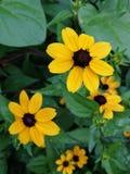 Κίτρινα λουλούδια σε πράσινο στοκ φωτογραφία με δικαίωμα ελεύθερης χρήσης