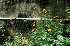 Κίτρινα λουλούδια στην ηλιοφάνεια στοκ φωτογραφίες με δικαίωμα ελεύθερης χρήσης