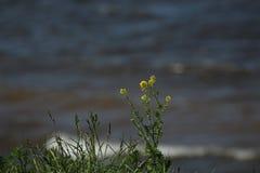Κίτρινα λουλούδια στην παραλία στον αέρα στοκ φωτογραφία με δικαίωμα ελεύθερης χρήσης