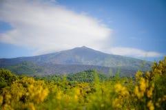 Κίτρινα λουλούδια στη βάση του υποστηρίγματος Etna στοκ φωτογραφία με δικαίωμα ελεύθερης χρήσης