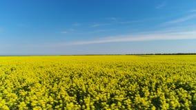 Κίτρινα λουλούδια συναπόσπορων στον τομέα με το μπλε ουρανό και τα σύννεφα, Αυστρία E Φωτεινό λιβάδι με τα κίτρινα λουλούδια στο  φιλμ μικρού μήκους