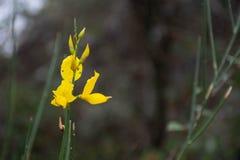 Κίτρινα λουλούδια φθινοπώρου στοκ φωτογραφίες