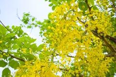 Κίτρινα λουλούδια. Στοκ εικόνες με δικαίωμα ελεύθερης χρήσης