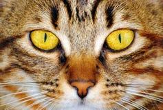 Κίτρινα μάτια γατών στοκ φωτογραφίες με δικαίωμα ελεύθερης χρήσης