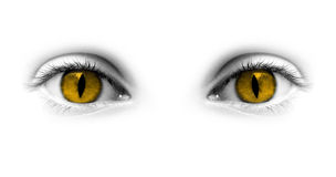 Κίτρινα μάτια Catwoman Στοκ Φωτογραφίες
