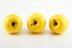 Κίτρινα μήλα Στοκ εικόνα με δικαίωμα ελεύθερης χρήσης