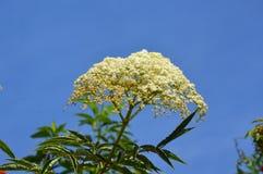 Κίτρινα μικροσκοπικά λουλούδια Στοκ Εικόνες