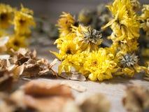 Κίτρινα ξηρά λουλούδια στο αγροτικό ξύλινο υπόβαθρο σανίδων στοκ εικόνα
