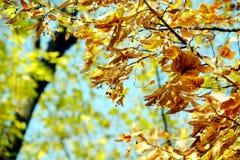 Κίτρινα ξηρά φύλλα δέντρων φθινοπώρου, θολωμένο φυσικό υπόβαθρο φθινοπώρου οικολογίας στοκ εικόνες