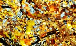 Κίτρινα ξηρά φύλλα ενάντια στο μπλε ουρανό, θολωμένο φυσικό υπόβαθρο φθινοπώρου οικολογίας στοκ φωτογραφία με δικαίωμα ελεύθερης χρήσης