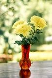 Κίτρινα λουλούδια άνοιξη Στοκ Εικόνα