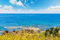 Κίτρινα λουλούδια και μπλε θάλασσα στην άνοιξη Στοκ εικόνες με δικαίωμα ελεύθερης χρήσης