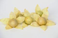 Κίτρινα λουλούδια και φρούτα Physalis στοκ εικόνα