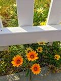 Κίτρινα λουλούδια κοντά στο φράκτη στοκ εικόνα