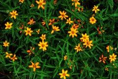 Κίτρινα λουλούδια με τα πράσινα φύλλα, grunge χρώμα που φιλτράρεται Στοκ εικόνα με δικαίωμα ελεύθερης χρήσης