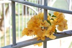Κίτρινα λουλούδια με την πύλη Στοκ Εικόνα