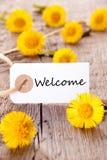 Κίτρινα λουλούδια με την υποδοχή Στοκ Εικόνες
