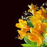 Κίτρινα λουλούδια με το μαύρο bacground Στοκ φωτογραφία με δικαίωμα ελεύθερης χρήσης