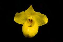 Κίτρινα λουλούδια ορχιδεών Στοκ εικόνα με δικαίωμα ελεύθερης χρήσης