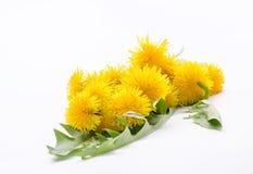 Κίτρινα λουλούδια πικραλίδων σε μια ανθοδέσμη Στοκ εικόνα με δικαίωμα ελεύθερης χρήσης