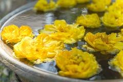 Κίτρινα λουλούδια που επιπλέουν στο νερό Στοκ Εικόνα