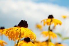 Κίτρινα λουλούδια σε έναν μπλε ουρανό Στοκ Φωτογραφία