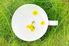 Κίτρινα λουλούδια σε ένα άσπρο φλυτζάνι Στοκ εικόνες με δικαίωμα ελεύθερης χρήσης
