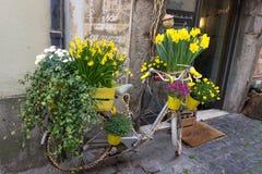 Κίτρινα λουλούδια σε ένα ποδήλατο στοκ φωτογραφία