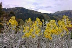 Κίτρινα λουλούδια στα βουνά Στοκ Εικόνες