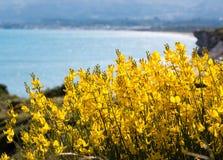 Κίτρινα λουλούδια στην παραλία Στοκ εικόνες με δικαίωμα ελεύθερης χρήσης
