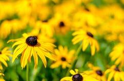 Κίτρινα λουλούδια στον ήλιο καλοκαιριού Στοκ φωτογραφίες με δικαίωμα ελεύθερης χρήσης
