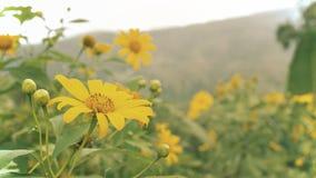 Κίτρινα λουλούδια στον κήπο στοκ εικόνες με δικαίωμα ελεύθερης χρήσης
