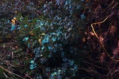 Κίτρινα λουλούδια φθινοπώρου χλόης Στοκ Φωτογραφίες