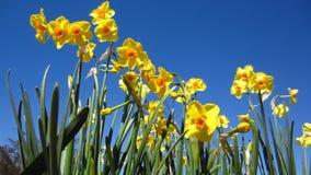 Κίτρινα λουλούδια φιλμ μικρού μήκους