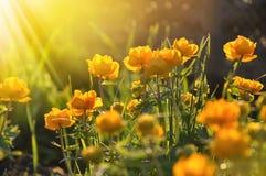 Κίτρινα λουλούδια Στοκ φωτογραφία με δικαίωμα ελεύθερης χρήσης