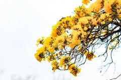 Κίτρινα λουλούδια Στοκ Φωτογραφία