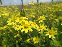 Κίτρινα λουλούδια Στοκ Εικόνες