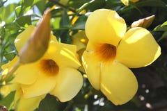 Κίτρινα λουλούδια Στοκ εικόνες με δικαίωμα ελεύθερης χρήσης