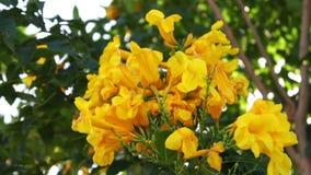 Κίτρινα λουλούδια Lushing στο φράκτη απόθεμα βίντεο