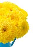Κίτρινα λουλούδια mum Στοκ φωτογραφία με δικαίωμα ελεύθερης χρήσης