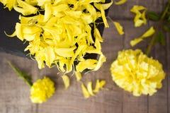 Κίτρινα πέταλα Zinnia Στοκ εικόνα με δικαίωμα ελεύθερης χρήσης