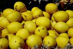 Κίτρινα πεπόνια Στοκ εικόνα με δικαίωμα ελεύθερης χρήσης