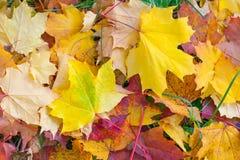 Κίτρινα πεσμένα φύλλα στο έδαφος Στοκ Εικόνα