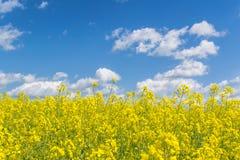 Κίτρινα πεδία στοκ εικόνα