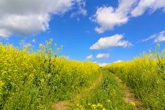 Κίτρινα πεδία στοκ εικόνα με δικαίωμα ελεύθερης χρήσης