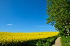 Κίτρινα πεδία Στοκ Εικόνες