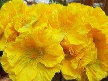Κίτρινα πλαστικά λουλούδια παπαρουνών Στοκ εικόνες με δικαίωμα ελεύθερης χρήσης