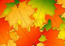 Κίτρινα, πράσινα και κόκκινα φύλλα σφενδάμου φθινοπώρου απεικόνιση Backgro Διανυσματική απεικόνιση